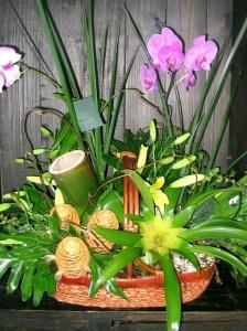 arreglo exótico orquidea